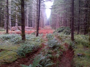 New Road at Port Blakley Tree Farms