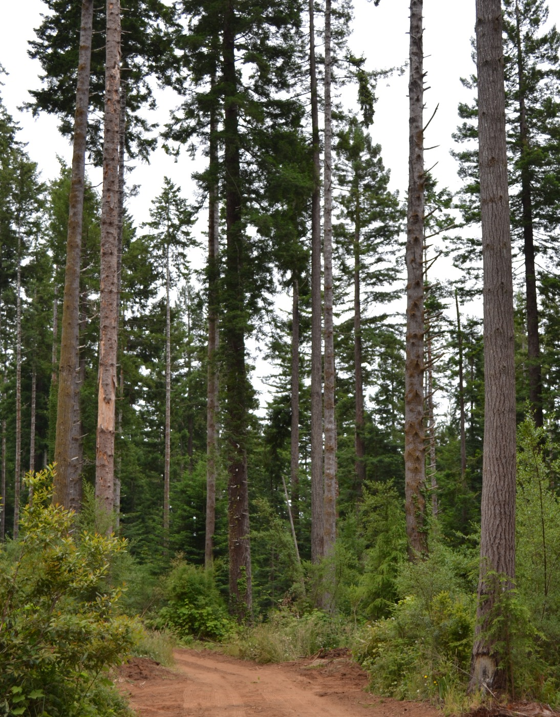 Port Blakely Tree Farms Prepares For Plc The Pacific Logging Congress Blog